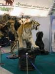 tigr1